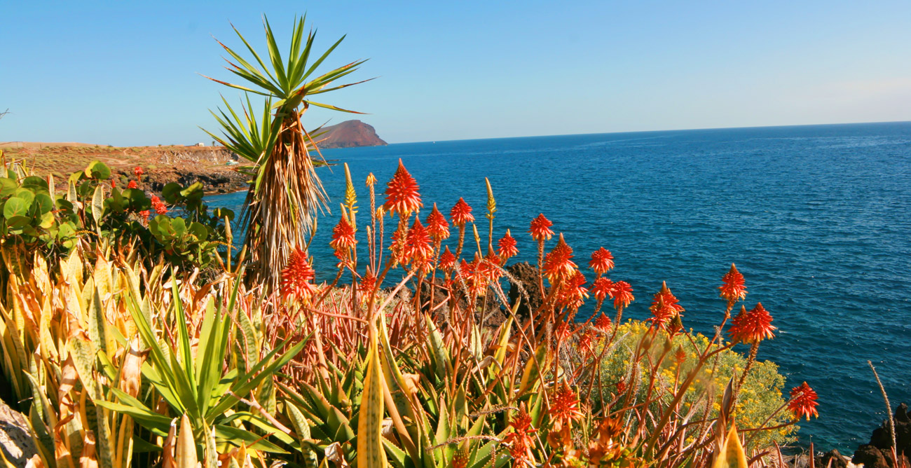 климат на Тенерифе