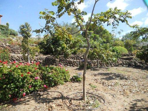 Усадьба в Тихоко Бахо (Тенерифе)