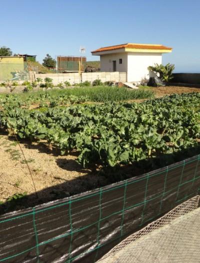 Усадьба в Гранадилла-де-Абоне (Тенерифе)